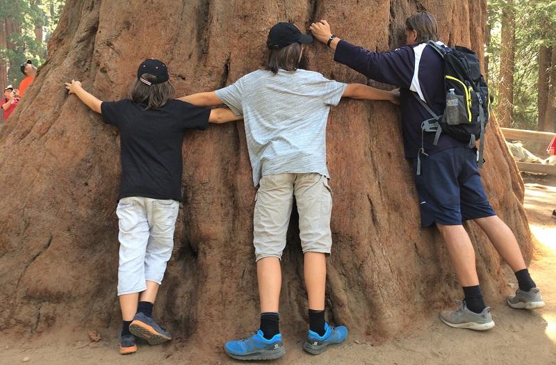 USA Roadtrip Tag 8: Sequoia National Park